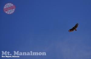 Ang Lawin ng Manalmon